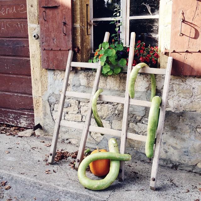Les courges rigolotes de la ferme de Fontaine André