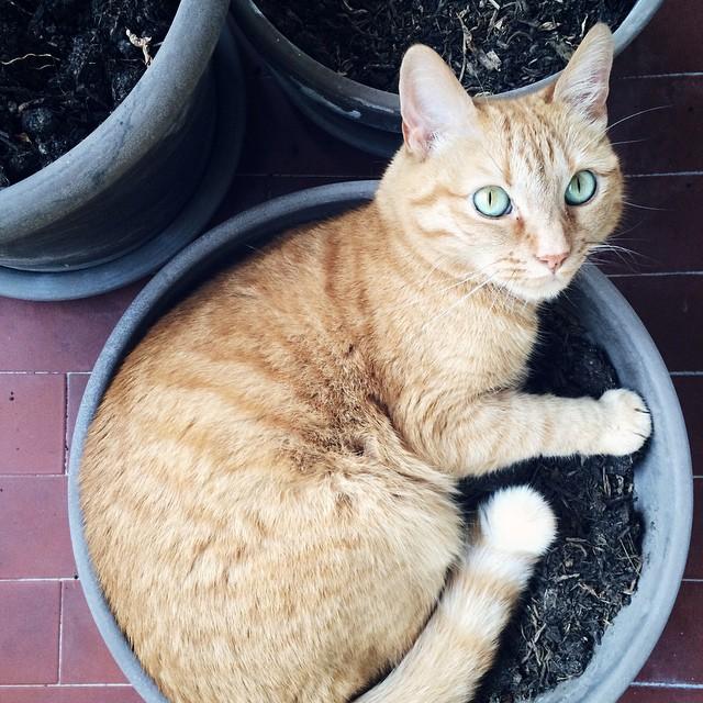 Le chat qui se prenait pour une plante verte