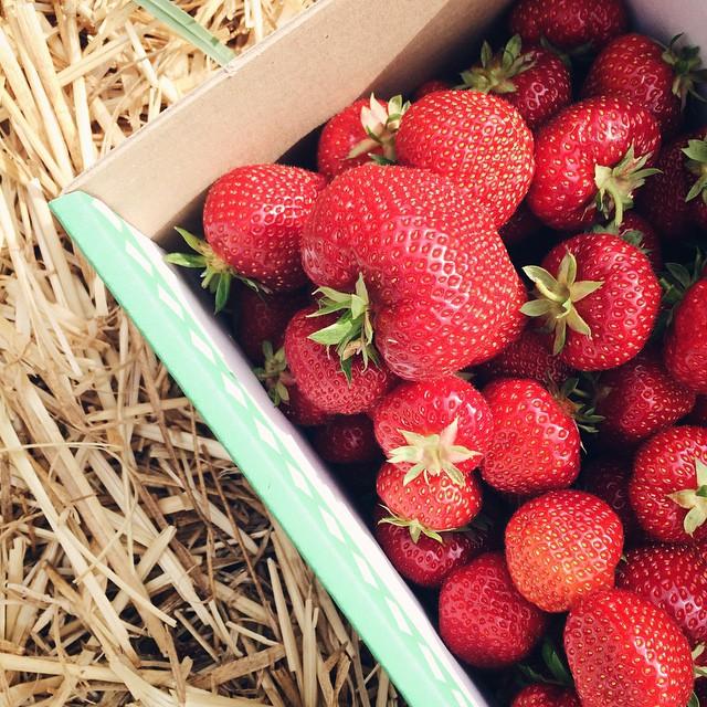 La récolte annuelle de fraises