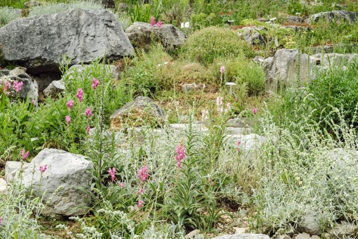 Neuchâtel – Jardin botanique – Le jardin de rocailles