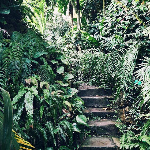 Les petits escaliers du jardin tropical –Jardin botanique de Strasbourg