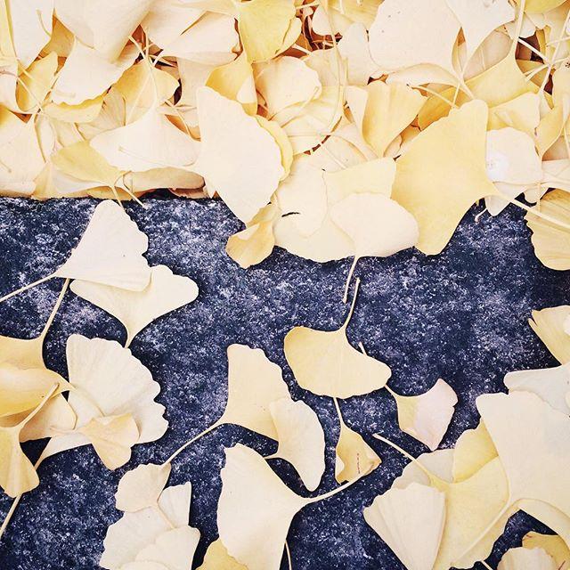 Déambuler dans les feuilles mortes