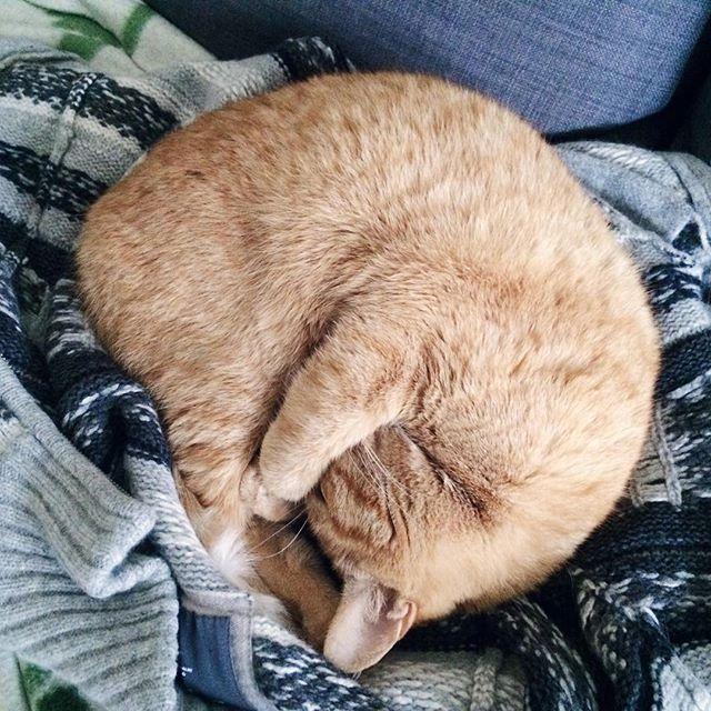 Et si on se roulait en boule comme mon petit chat, et qu'on attendait le printemps au chaud ?