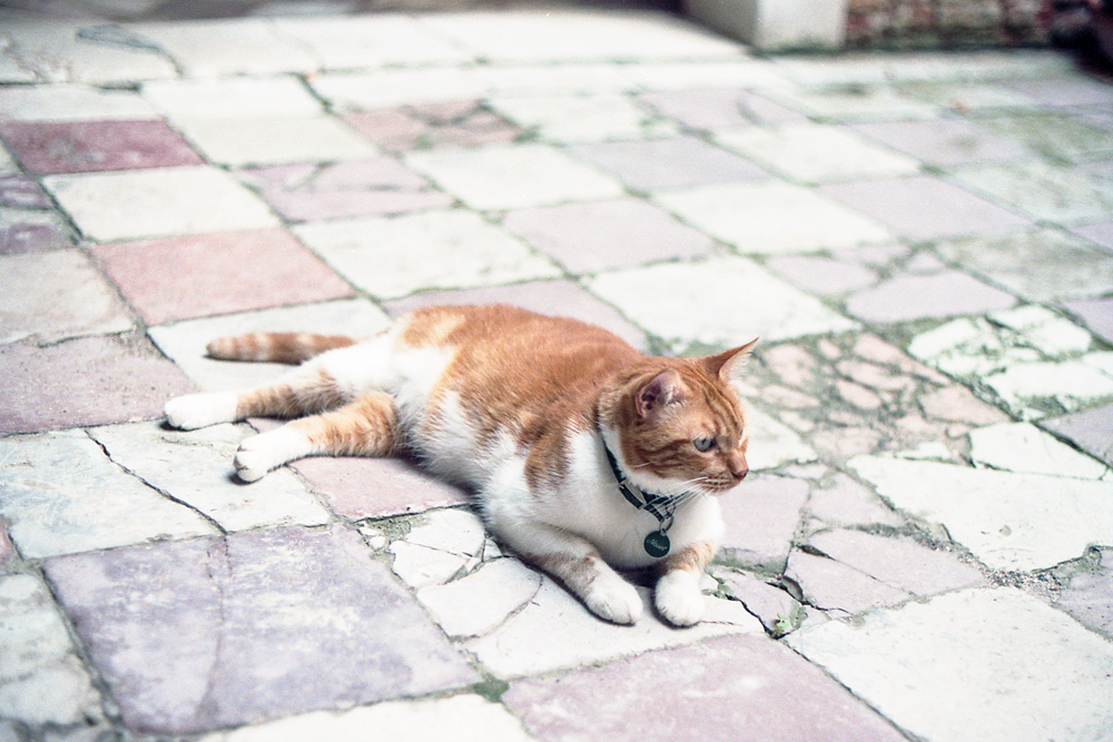 Un chat vénitien ♥