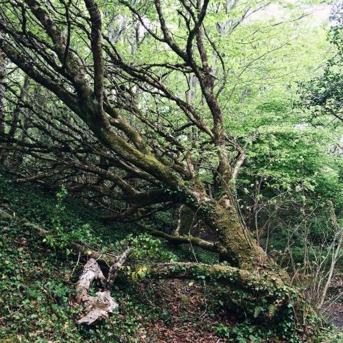 Road trip en Irlande – La forêt enchantée de Derrynane House