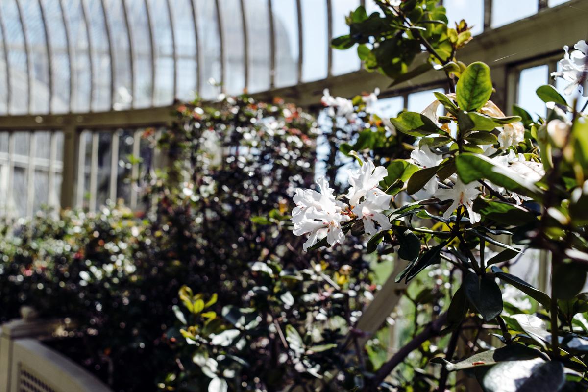 Dublin – National Botanic Gardens