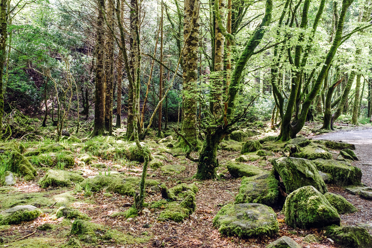 Killarney National Park – Ring of Kerry