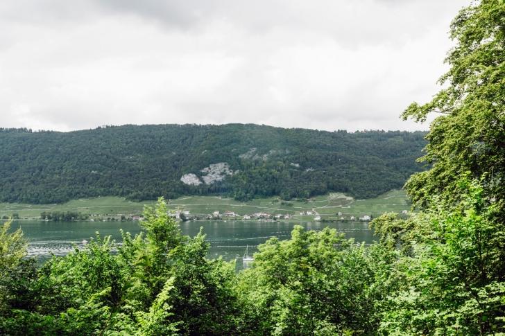 Promenade sur l'Île Saint-Pierre, vue sur la rive du lac de Bienne