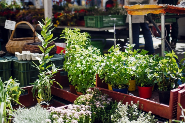 La Chaux-de-Fonds – Marché aux légumes