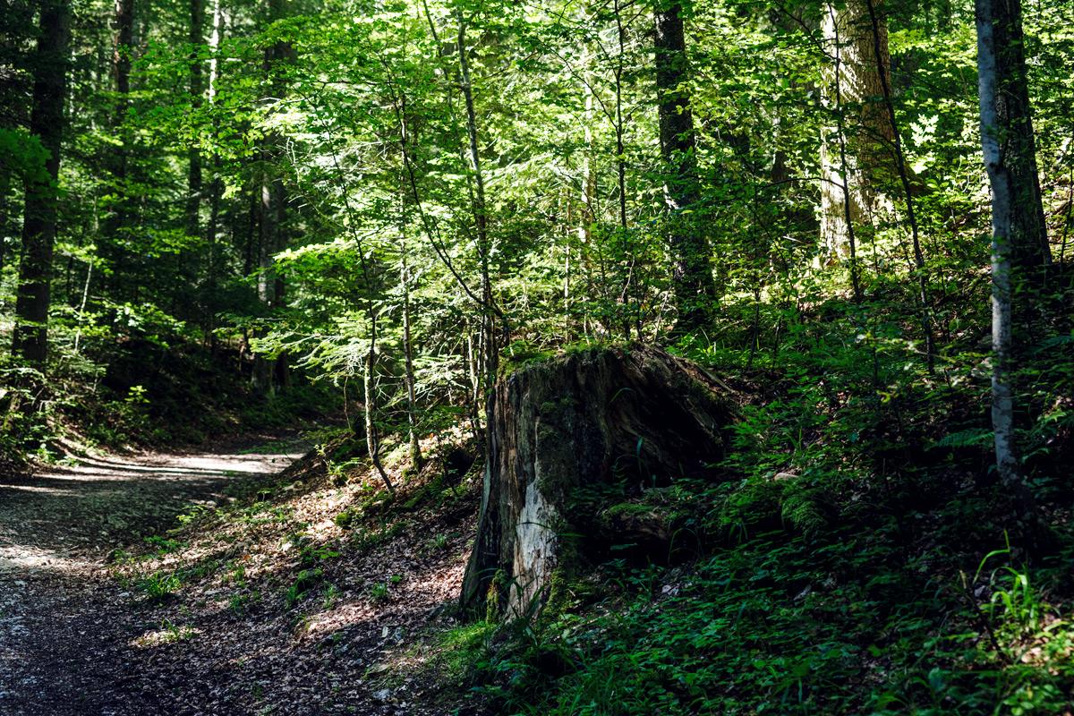 La Chaux-de-Fonds – Dans la Forêt