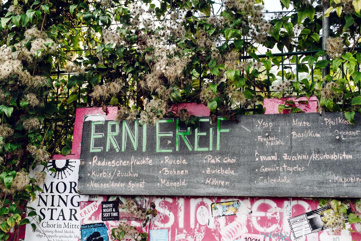 Prinzessinnengarten, jardin communautaire –Berlin, Kreuzberg