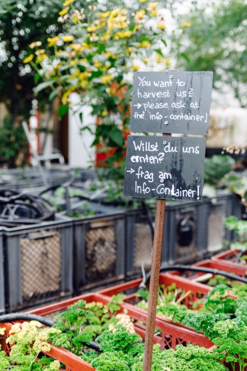 Prinzessinnengarten, jardin communautaire – Berlin, Kreuzberg