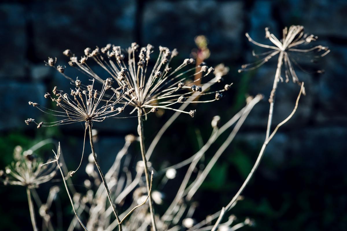 Jardin botanique de Neuchâtel – Automne