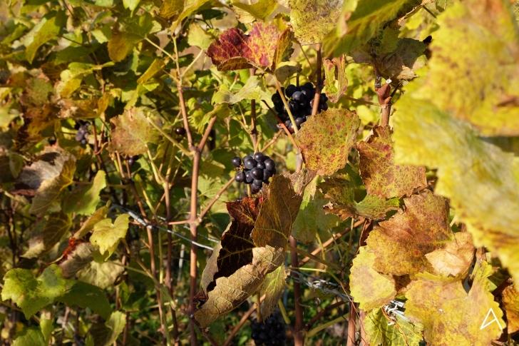 Balade aux couleurs automnales dans les vignes de Lavaux – Awwway