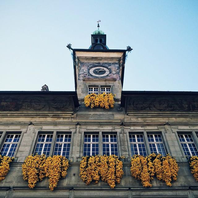 Les fleurs jaunes de l'Hôtel de Ville de Lausanne
