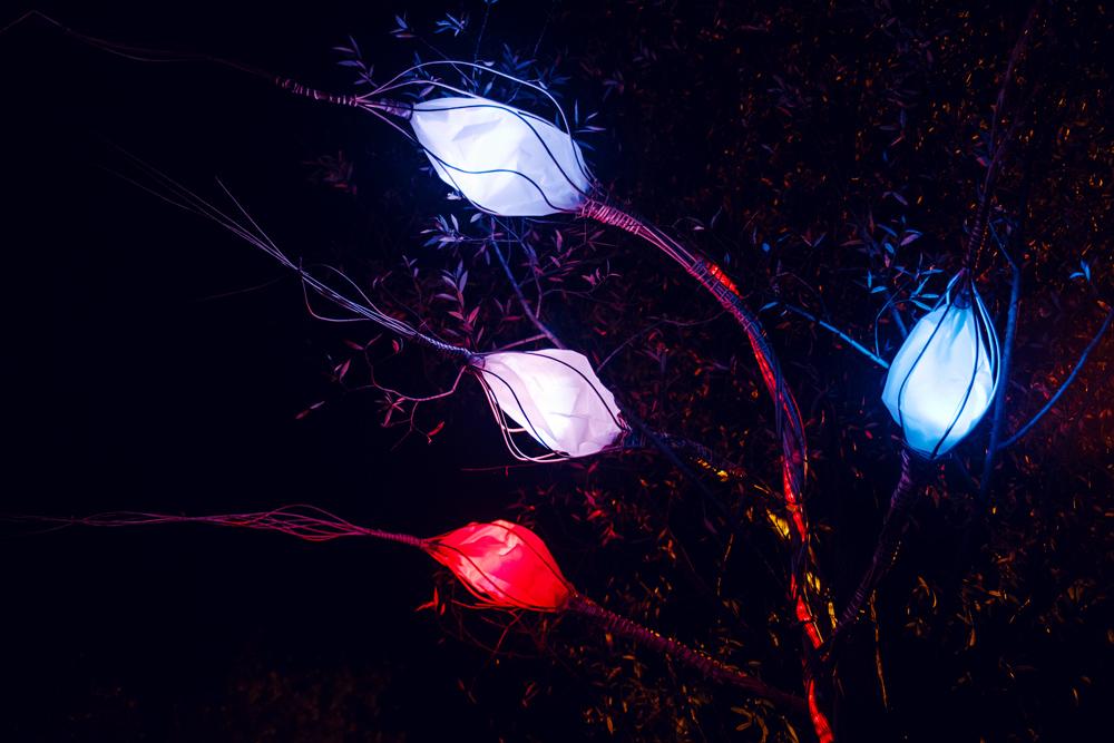 Fête des Lumières 2014 – Lumi'lierre