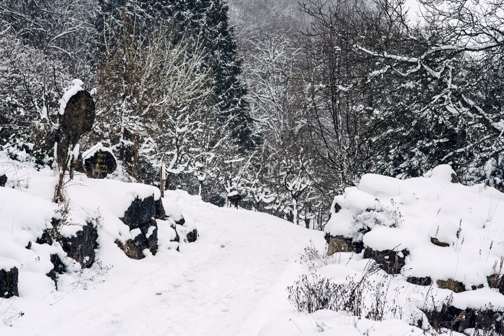 Le jardin botanique de Neuchâtel sous la neige