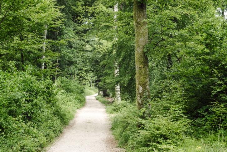 Neuchâtel – Chemin forestier