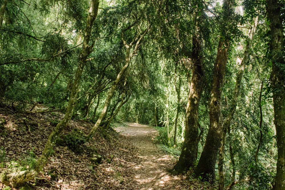 Neuchâtel – Chemins forestiers
