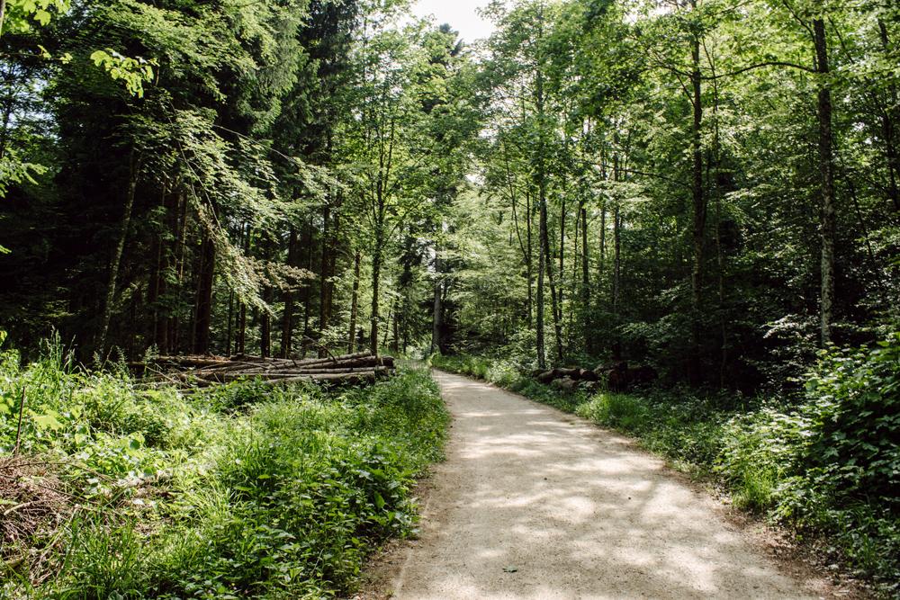 Balade dans la forêt neuchâteloise