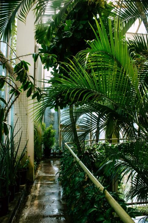Strasbourg – Serre tropicale du jardin botanique