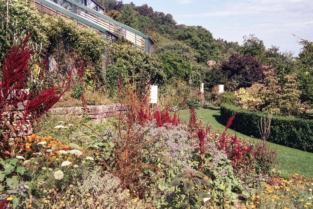 Kodak Retinette – Jardin botanique de Neuchâtel