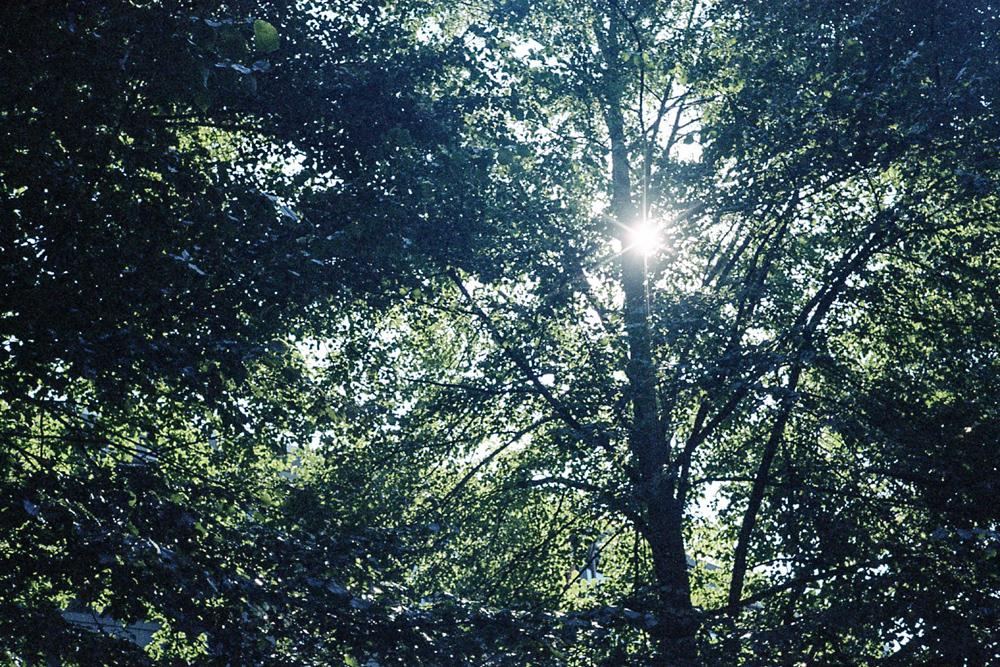 Rollei 35s – Le soleil entre les arbres