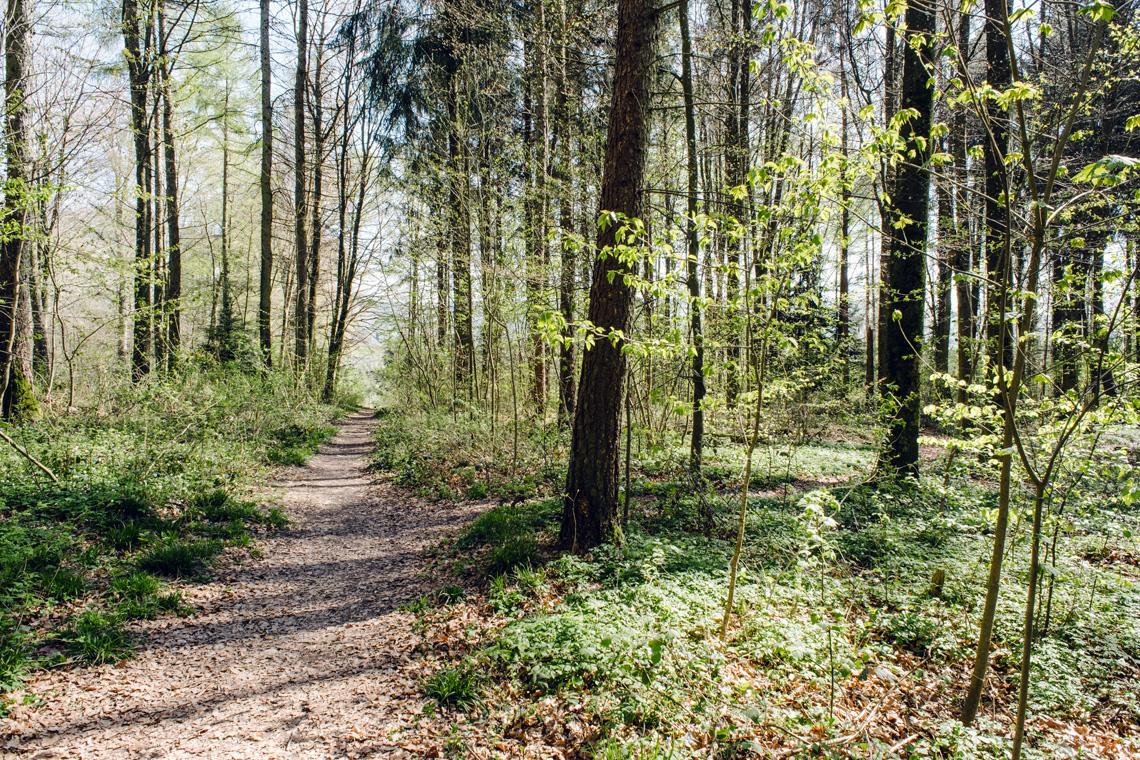 Balade dans la forêt du Längholz