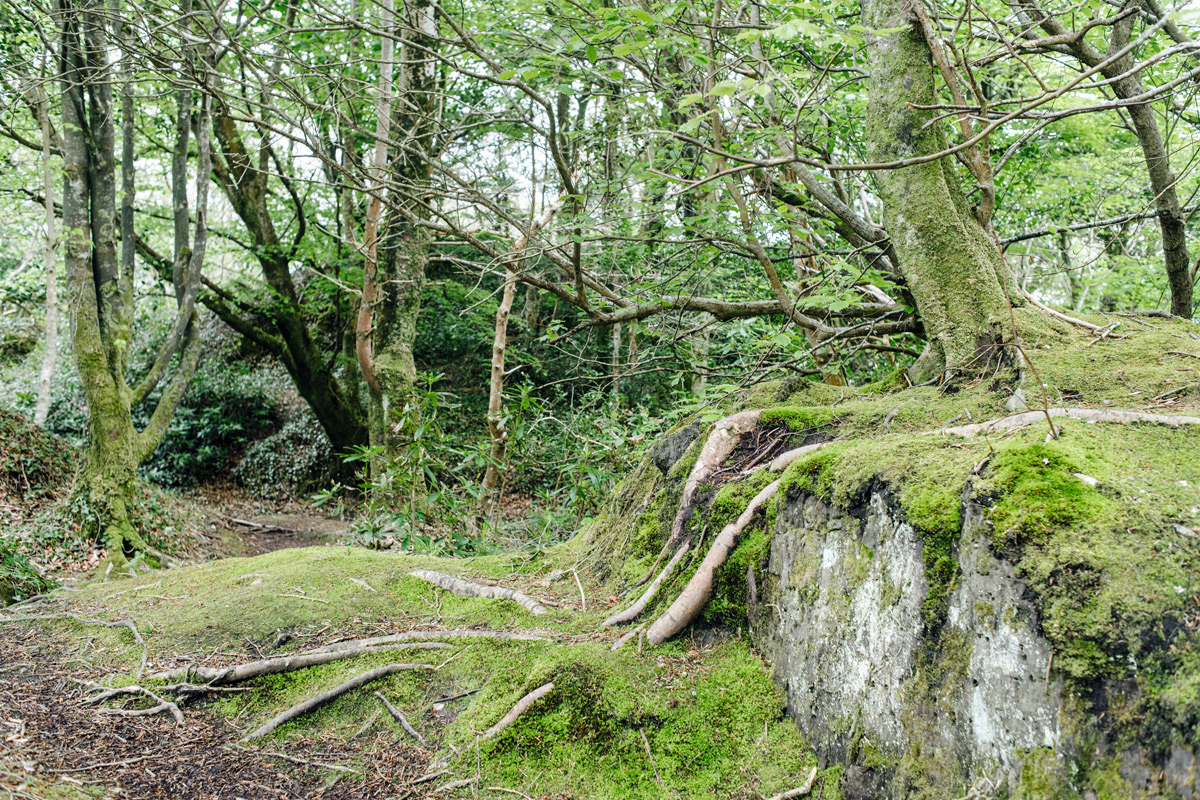 Derrynane Forest –Ring of Kerry
