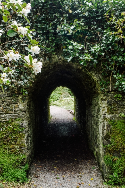 Derrynane Forest – Ring of Kerry