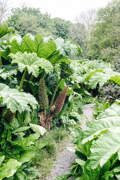 Derrynane House and Gardens – Ring of Kerry