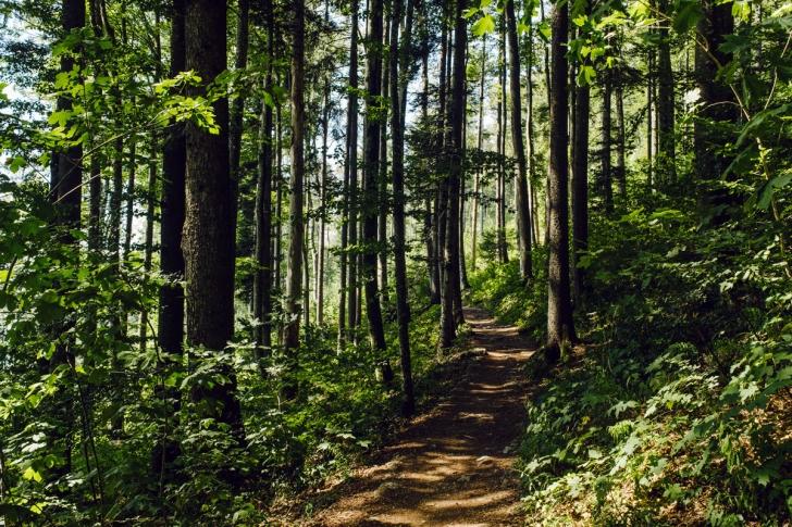 Sentier forestier entre Macolin et la montagne de Twann