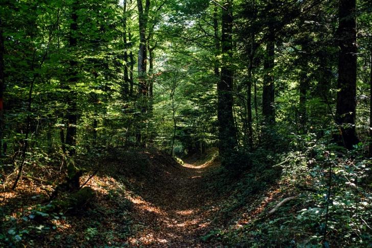 Forêt de Gorgier