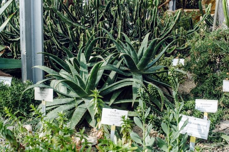 Berlin – Botanischer Garten
