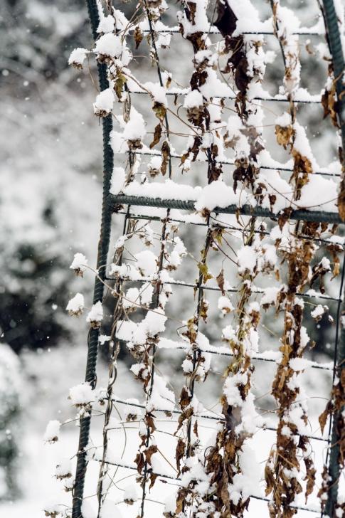 Jardin botanique de Neuchâtel – Hiver