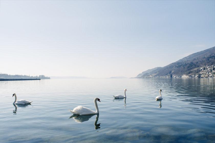 Balade hivernale au bord du lac de Bienne