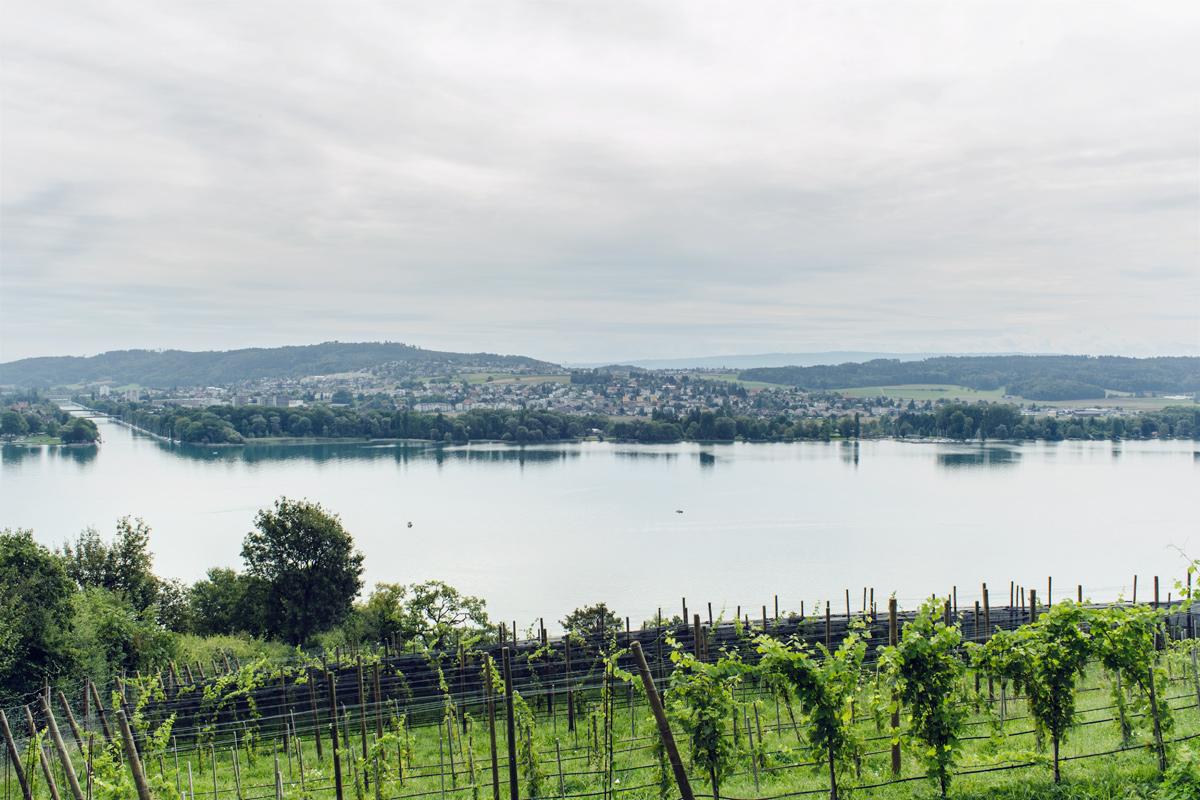 Vue sur le lac de Bienne et l'Aar depuis le Chemin des Vignes