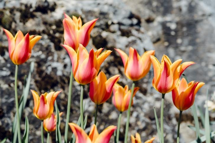 Jardin botanique de Neuchâtel – Printemps
