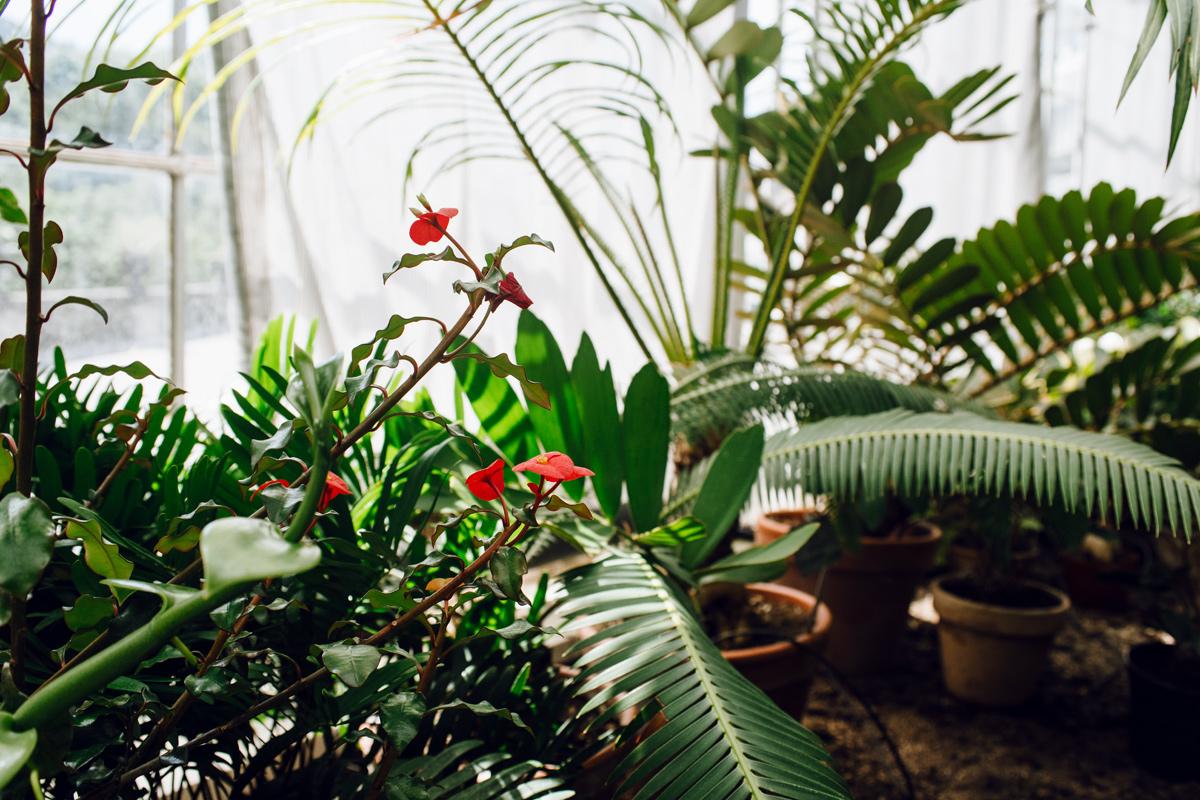 La grande serre tropicale du jardin botanique de Copenhague