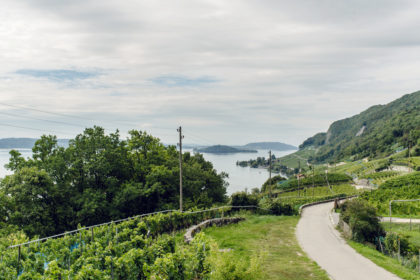 Vue sur le lac de Bienne et l'Île Saint-Pierre depuis le Chemin des Vignes