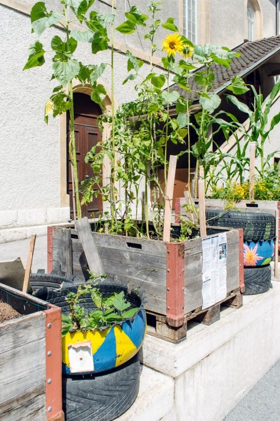 Les Incroyables Comestibles, bacs potagers au centre ville de Neuchâtel