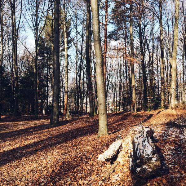 Balade hivernale dans la forêt