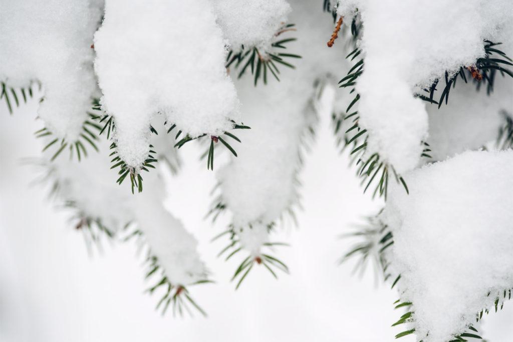 Bienne, balade dans la forêt sous la neige
