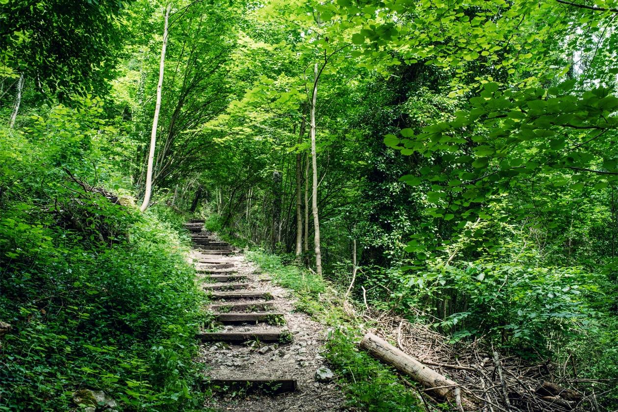 Montée dans la forêt jusqu'aux ruines du Château de Neu-Falkenstein