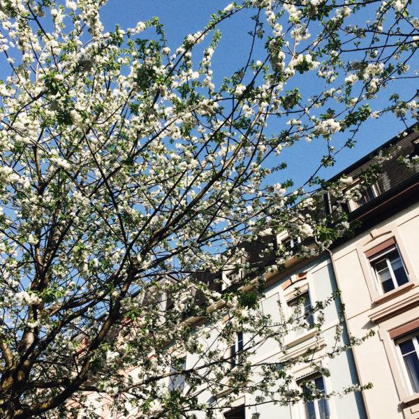 Les jolis arbres en fleurs le long du canal