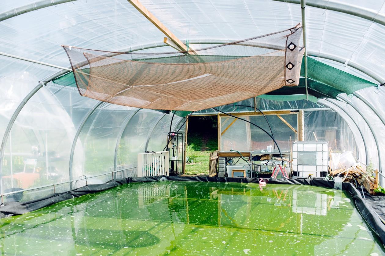 Terrain de la Gurzelen, Bienne – Culture de spiruline