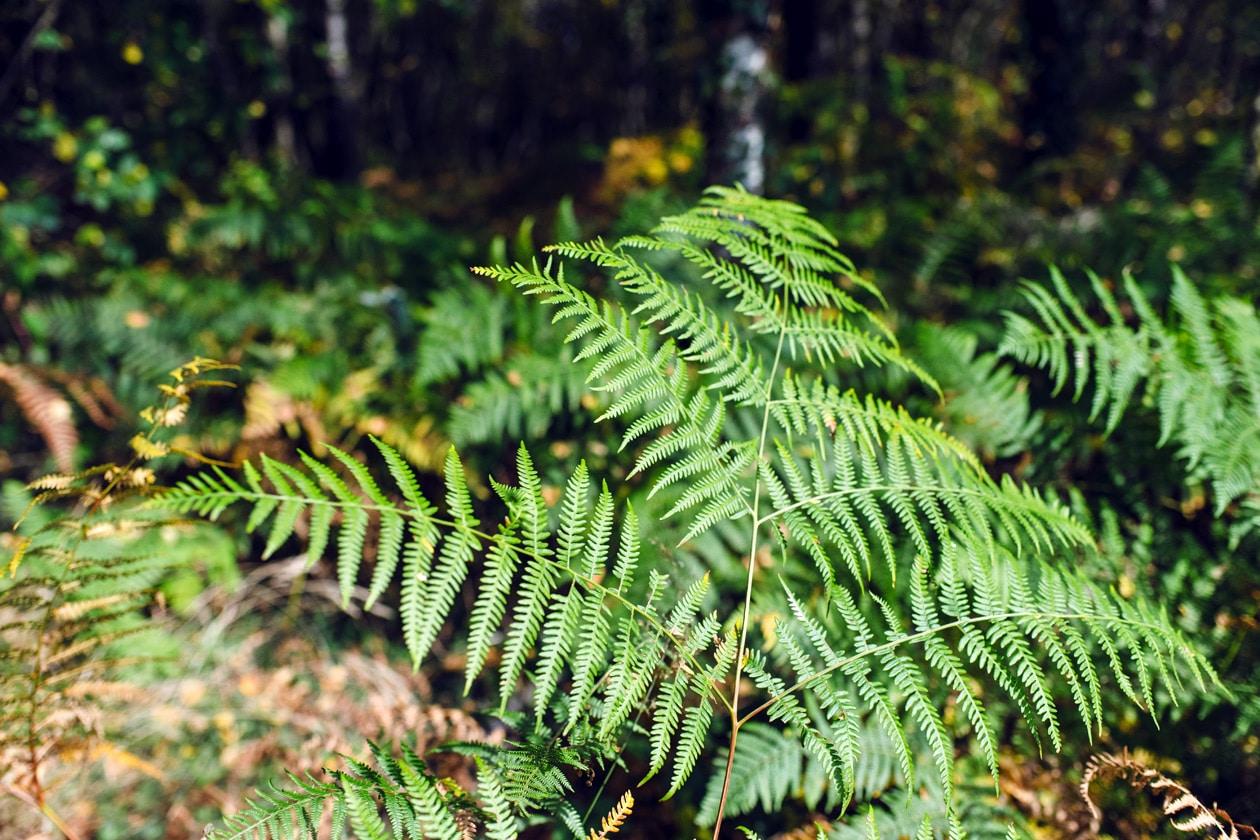 Bretagne, forêt de Paimpont