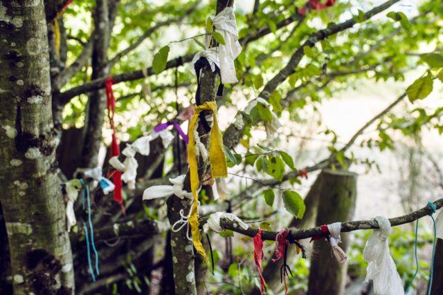 Bretagne, forêt de Paimpont: arbre à loques à côté du Tombeau de Merlin
