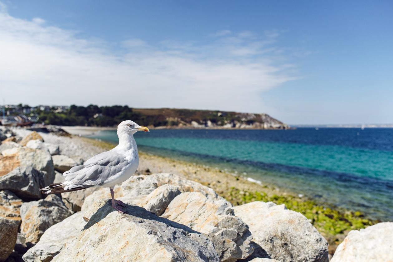 Bretagne: pique-nique en compagnie d'un goéland au port de Camaret-sur-Mer