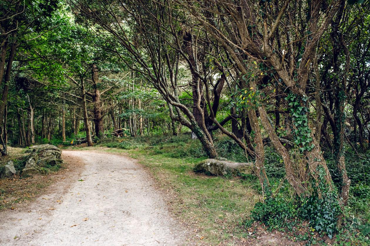 Bretagne – Réserve naturelle de Cap Sizun, Forêt du moulin de Keriolet